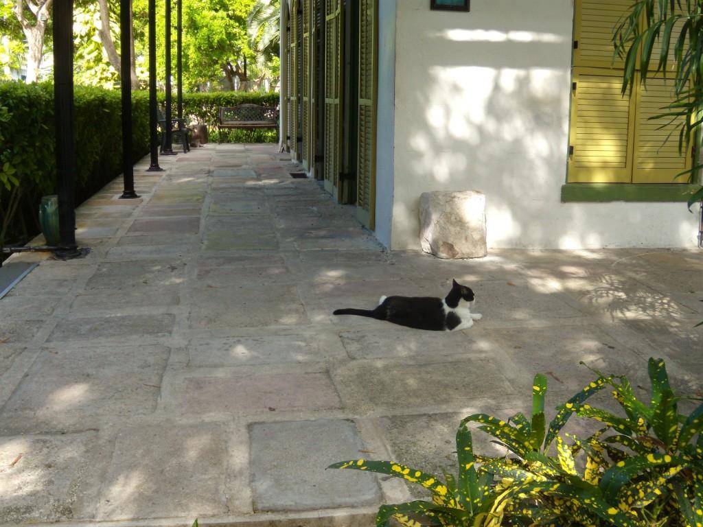 Hemingway's house cat